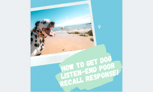 how to get dog listen-end