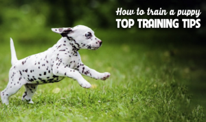 top training tips dog